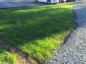Ecoraster_Grass